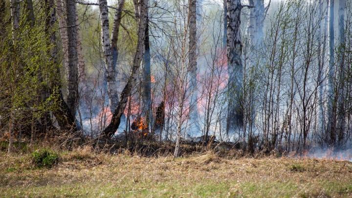 «У нас всё готово»: в МЧС рассказали, как будут действовать, если огонь перекинется на населенные пункты Югры