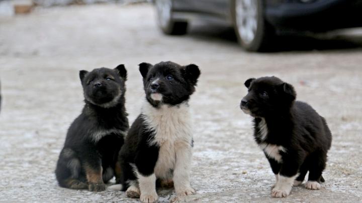 Депутаты отозвали из Госдумы законопроект, разрешающий убивать бездомных животных