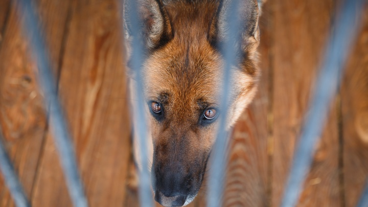 В Кузбассе будут судить двух мужчин, зарубивших топором собаку