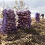 Почему цена на картошку в России зависит от евро и доллара, какие сорта сажать, и когда копать — ликбез от ученого