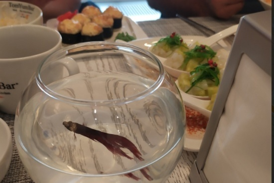 По словам сотрудницы бара, рыбки на столе — это элемент интерьера