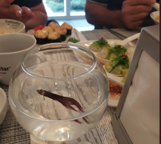 «Развлекать, а потом сдохнуть». Тюменцы возмутились рыбкам в стаканах на столах в новом баре