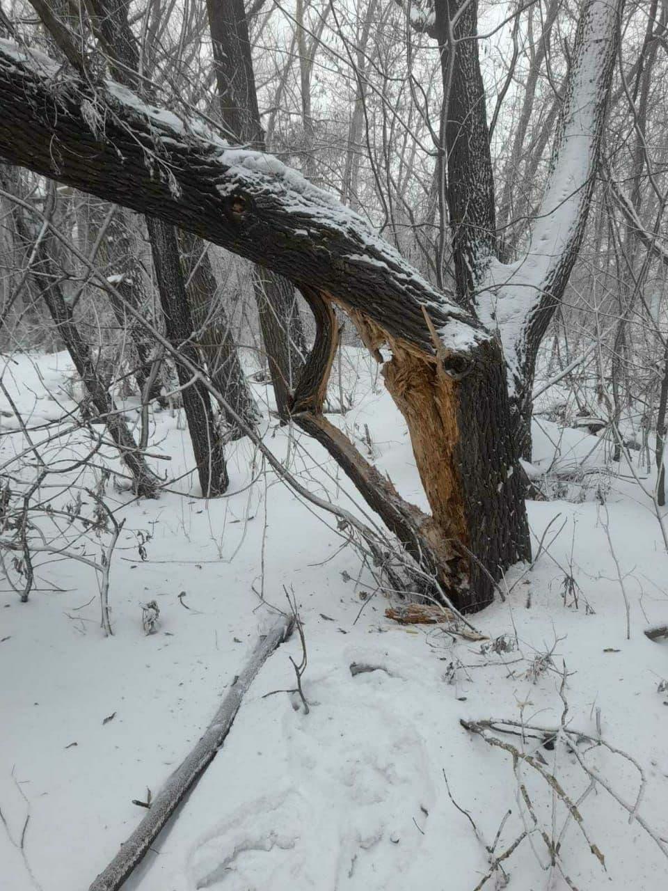 Дерево рухнуло на провода на улице Хлебозаводской