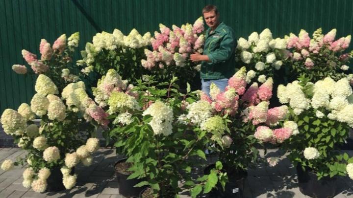 От прекрасных яблонь и груш до пышной гортензии: новый садовый центр «Виктория» удивил ассортиментом