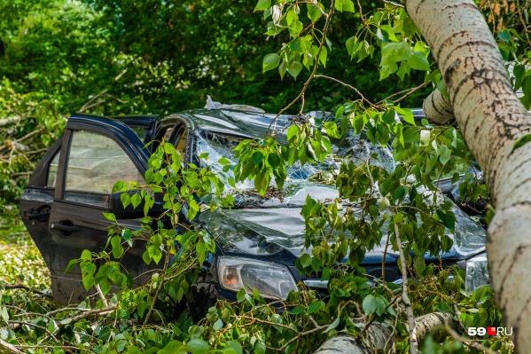 Не паркуйте автомобили около деревьев