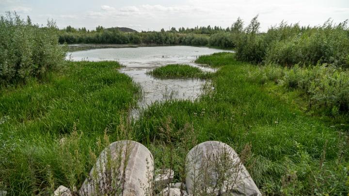 Самая крутая речка Новосибирска: прогулка с НГС по берегам с костяникой, заповедным лесом и полянками для пикников
