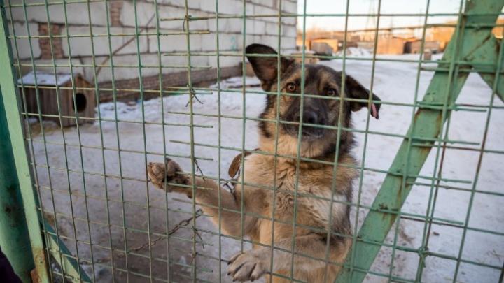 Чиновники предложили строителям брать для охраны собак из приютов