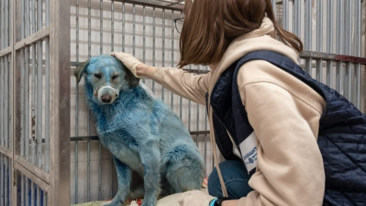 Собаки цвета берлинской лазури: выяснилось, почему животные в Дзержинске стали синими