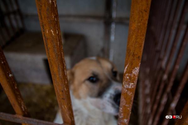 Собак забрали в приют