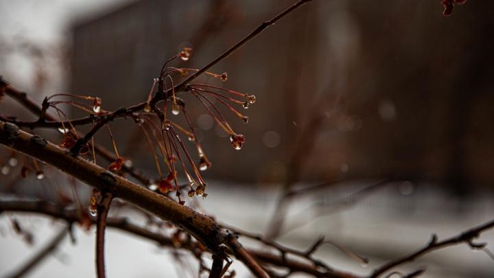 Синоптики рассказали, когда в Новосибирске начнут идти весенние дожди