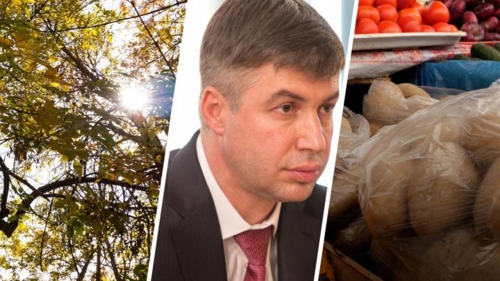 Неудержимые цены на картошку и желание застроить весь Ростов. Итоги недели