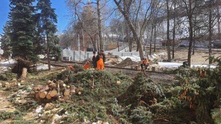 Власти назвали срубленные вековые ели в Нижегородском кремле «переросшей живой изгородью»