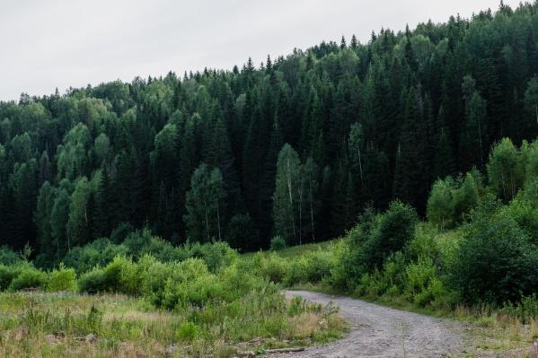 Жителям запрещали ходить в лес из-за природных пожаров