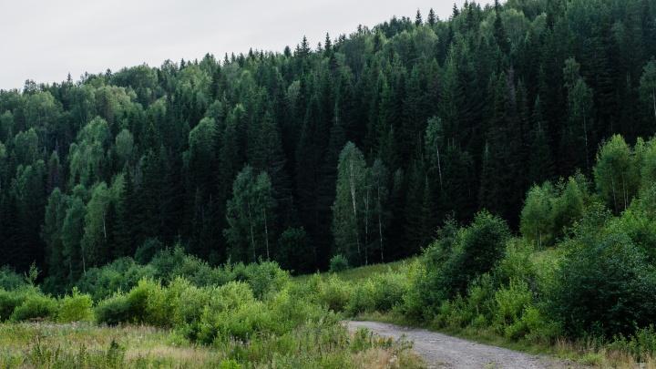 Жителям Прикамья опять разрешили гулять в лесах