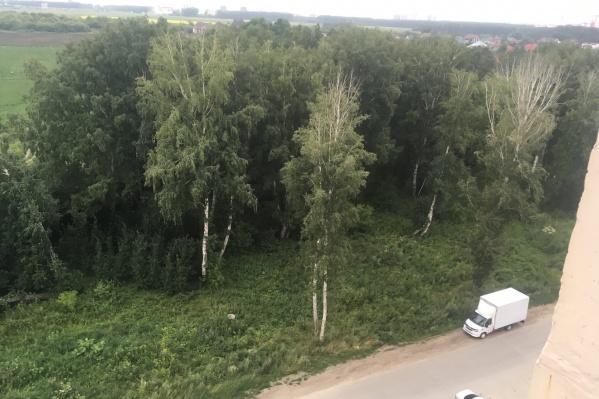 """В марте 2021 года в рощу около дома <nobr class=""""_"""">№ 205/2</nobr> в поселке Краснообск несколько раз привозили грязный снег"""