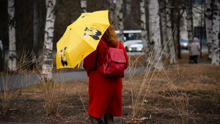 От гроз до мокрого снега: ближайшая неделя в Архангельской области будет пасмурной и дождливой