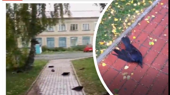 Апокалипсис в Усть-Тарке: о массовой смерти новосибирских ворон написал британский таблоид The Sun