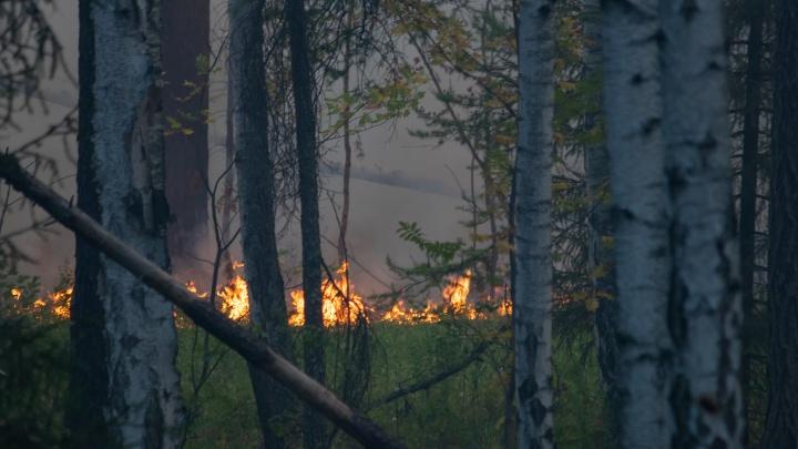 Почему пожар под Екатеринбургом не могут потушить неделю? Отвечают министр и лесоохрана