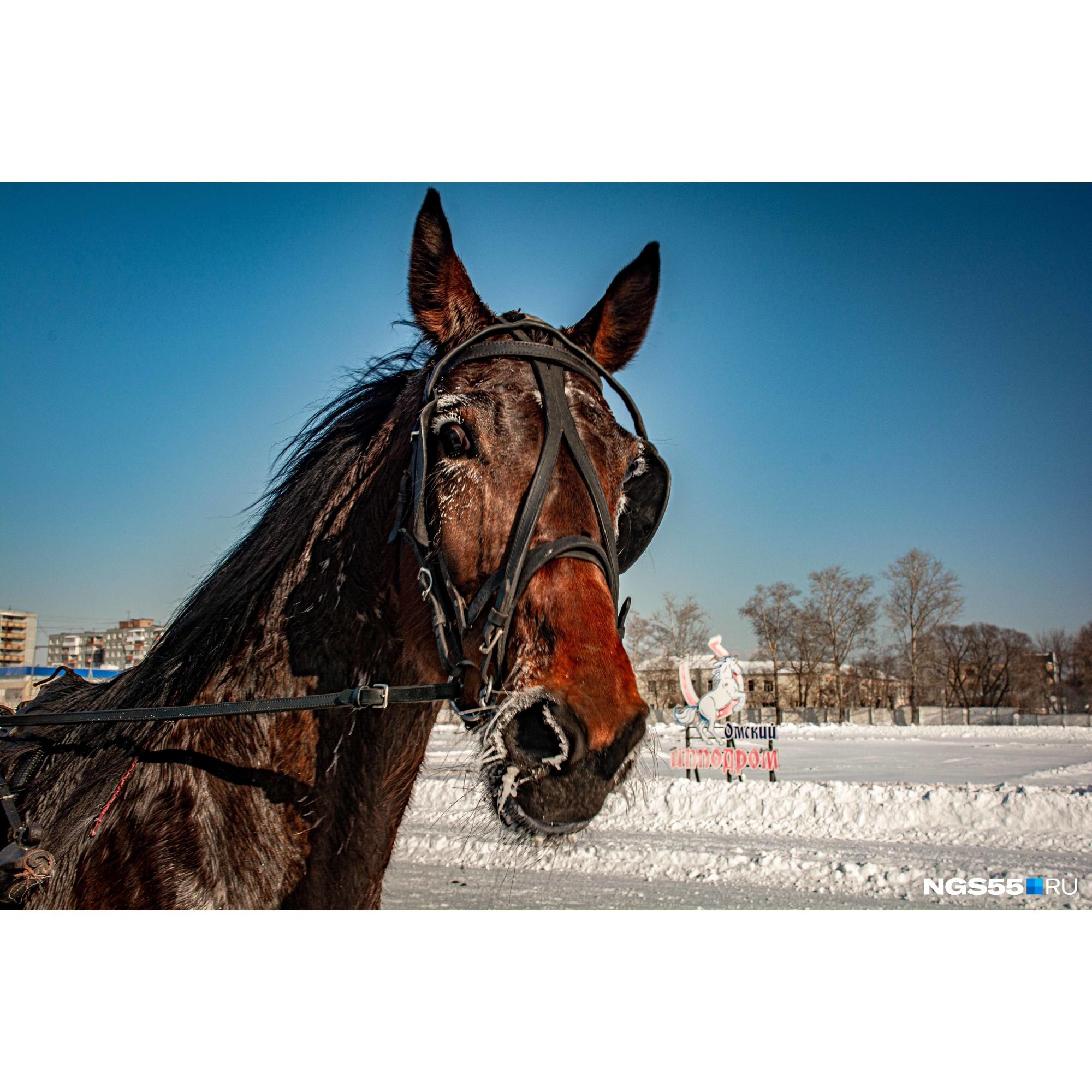 «Можно полюбопытствовать: а вам симпатичны лошади?»