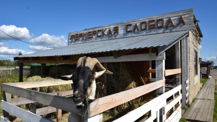 От производства мяса к гостевому двору: что прошел предприниматель ради процветания «милого» бизнеса