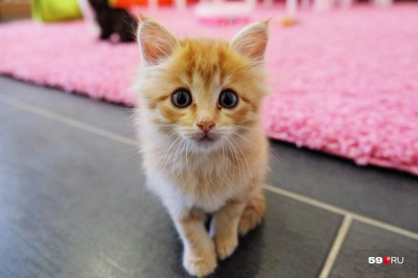 Позже при клинике поселятся спасенные домашние животные