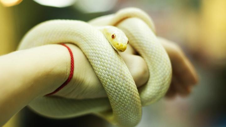 В Екатеринбурге в «Парке бабочек» 5-летнюю малышку укусила змея. Это записали на видео