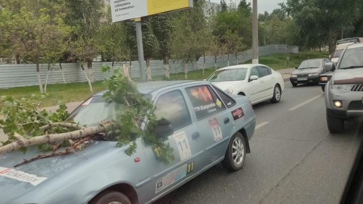 В Волгограде ветка дерева рухнула на машину автоинструктора. Ранена ученица