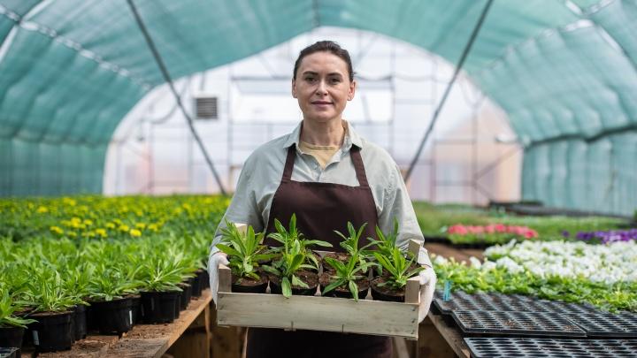 Тимьян — на подоконник, азалию — в сад: в Челябинске распродают растения со скидками до 50%