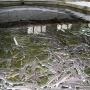 На Дону появится государственный комплекс по разведению осетра. Он стоит 296 млн
