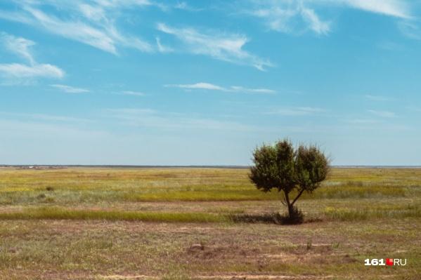 Эксперт считает, что в Ростовской области много экологических организаций — и это проблема