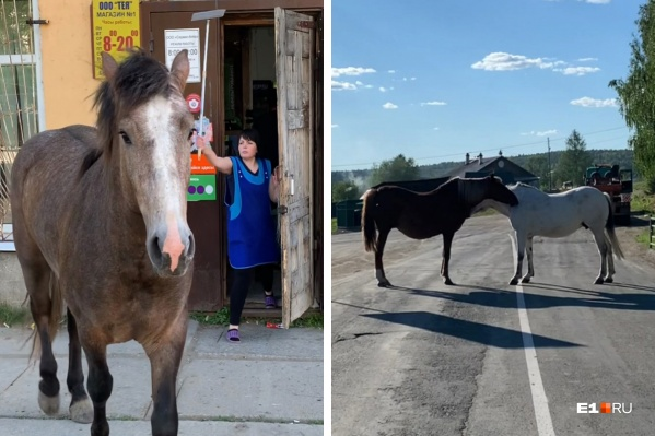 Лошади в уральском селе чувствуют себя очень вольготно: они ходят по магазинам и перекрывают дороги
