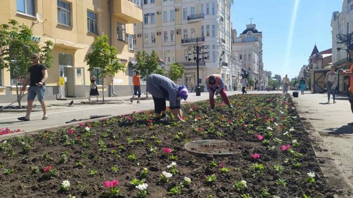 Мэрия: цветы на Ленинградской убила аномальная жара