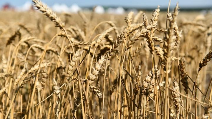 Губернатор рассказал, сколько денег у региона съела засуха