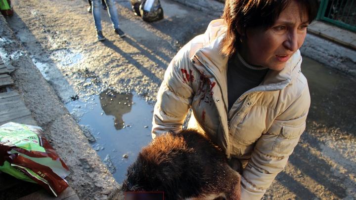 «Выгуливает с резиновой дубинкой»: омичи судятся с зоозащитницей, которая поселила собак в хрущевке