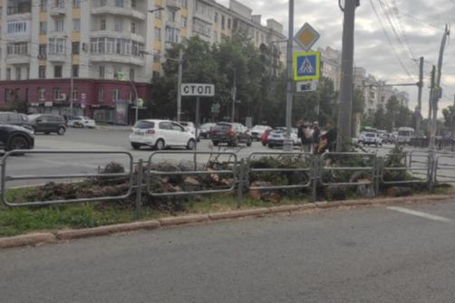 «Кто в администрации понесет за это ответственность?» Активист — о вырубке столетних лиственниц в Челябинске