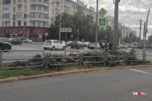 Деревья, о которых знал весь город, росли на перекрестке проспекта Ленина и улицы Красной