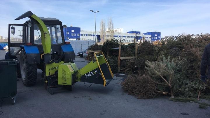 Вырубленные деревья Волгограда отправили на щепу для бродячих собак