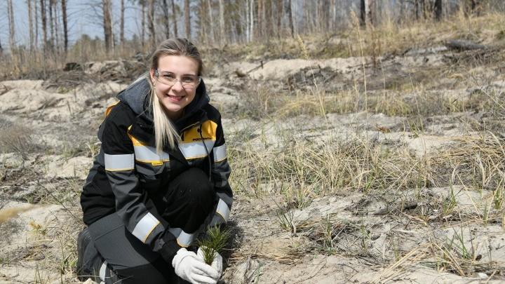 Губерния зеленеет: в Сызранском районе высадили 7000 саженцев сосны
