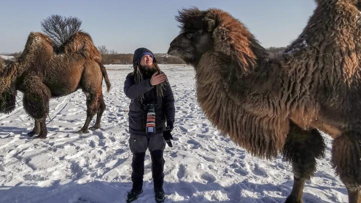 Гордые верблюды, пугливые олени. Большой фоторепортаж из Горненского заказника