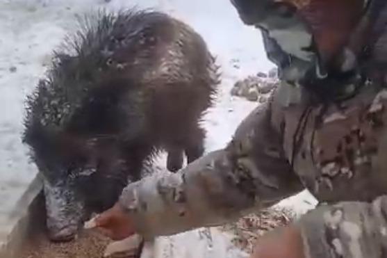 Варварски обстреляли: в национальном парке спасли кабанят, маму которых убили браконьеры