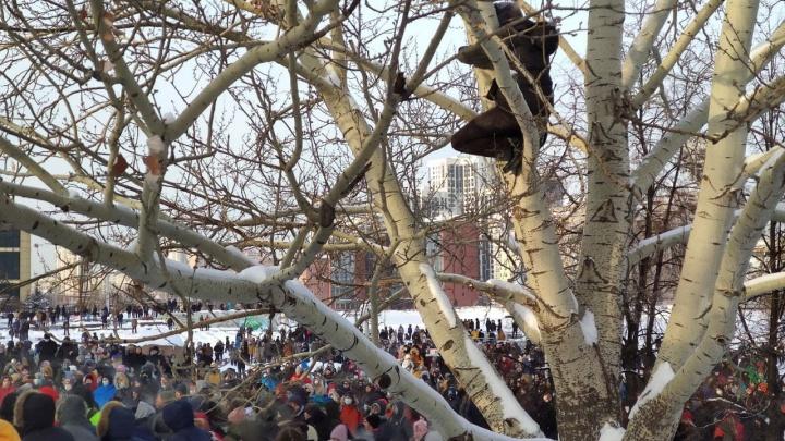 Ленинский суд Екатеринбурга арестовал парня, который прятался на дереве от ОМОНа во время протестов