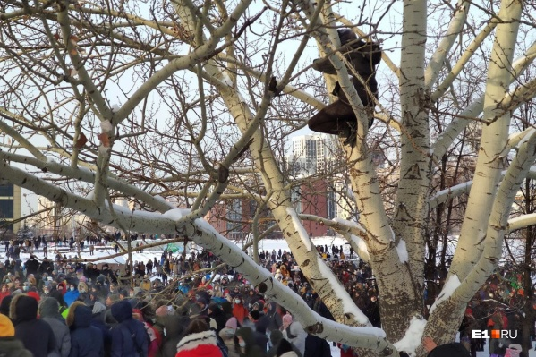 Парню, который прятался на дереве, назначали административный арест