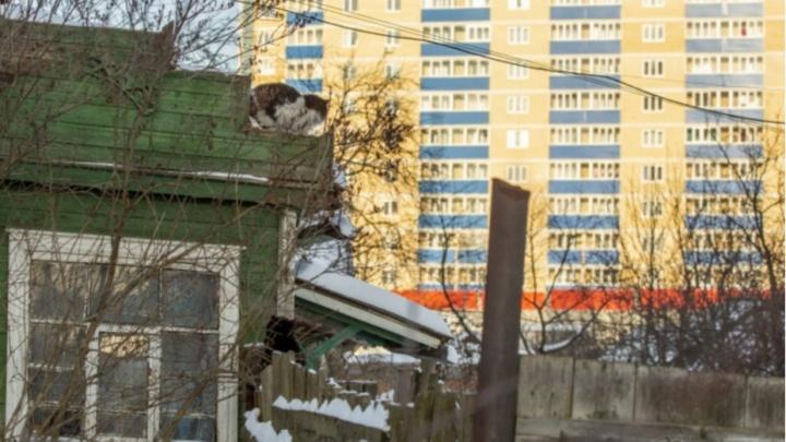 На фоне великанов: как живет деревенский уголок в окружении высоких новостроек