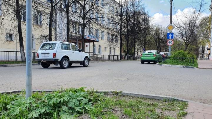 Вторжение борщевика: ядовитое растение захватило центральные улицы Ярославля