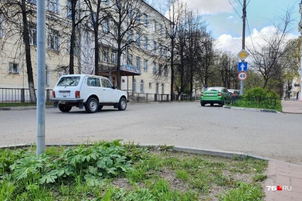 Борщевик растет даже на центральных улицах Ярославля