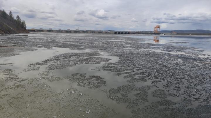 В водохранилище БоГЭС нашли масляные пятна размером в 15 гектаров