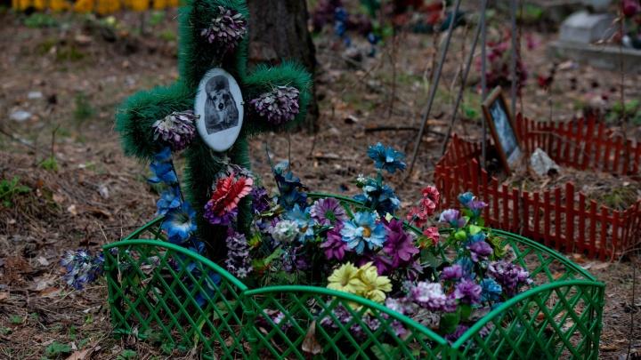 От нелегальных кладбищ до кремации: как в Тюмени хоронят домашних животных