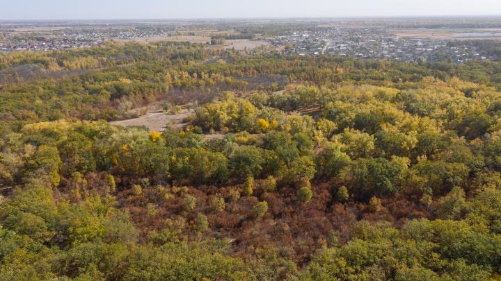 Делать там нечего: леса Волгоградской области изолируют от случайных посетителей