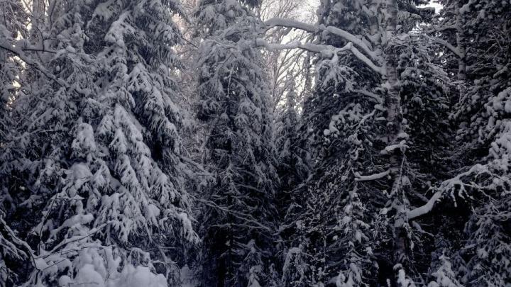 Практически лето: сегодня на юго-западе Югры потеплеет до -2 °С. Похолодание придет, но не сразу