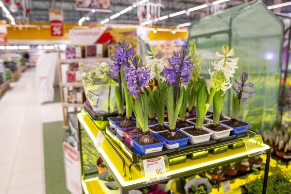 В гипермаркете «Глобус» есть всё для того, чтобы на даче вырос хороший урожай и красивые цветы